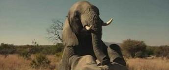 Bracia Grimsby - Scena ze słoniami