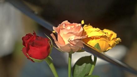 Katana ścina róże w zwolnionym tempie
