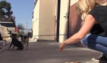 Psy zostały wyrzucone na ulicę po śmierci właściciela