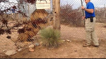 Instruktor pokazuje jak obchodzić się z lwami
