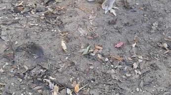 Zaskakujący finał polowania na myszę