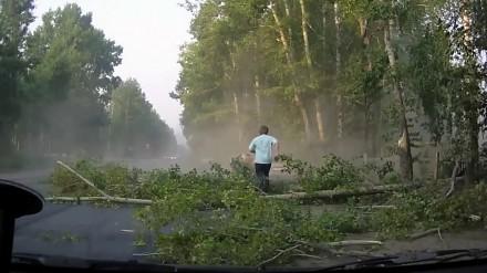 Sposób na szybkie ścięcie brzozy - wypadek