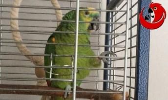 Śpiewająca papuga - wlazł kotek na płotek