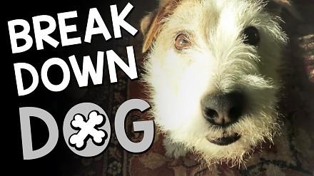 Pies, w którego żyłach płynie metal!