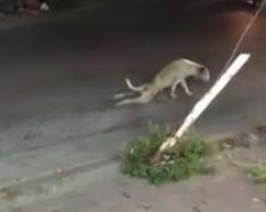 Biedny piesio błąka się po ulicy