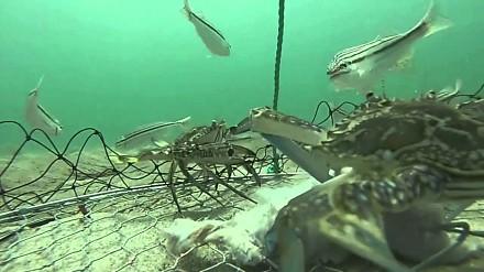 Dzień z życia klatki do poławiania krabów