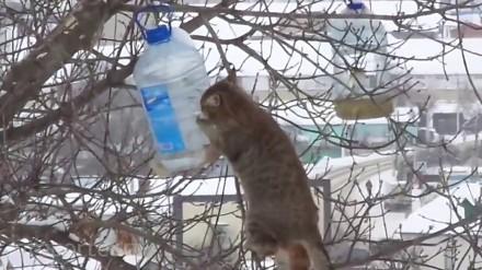 Kot-akrobata kradnie słoninę z karmnika dla ptaków