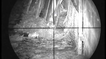 Upolował 120 szczurów z wiatrówki wyposażonej w celownik optyczny i noktowizor