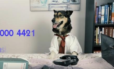 Najgorsza reklama biura księgowego z Poznania. Z psem w garniaku za biurkiem