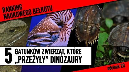 """5 gatunków, które """"przeżyły"""" dinozaury"""