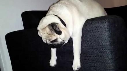 Słodka psina ucięła sobie drzemkę w zabawnej pozycji