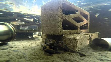 Przydomowa, słodkowodna farma homarów