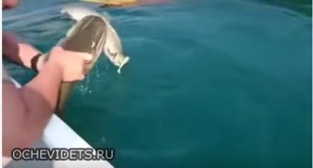 Dwie ryby na jednej wędce
