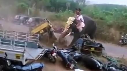 Słoń się wkurzył