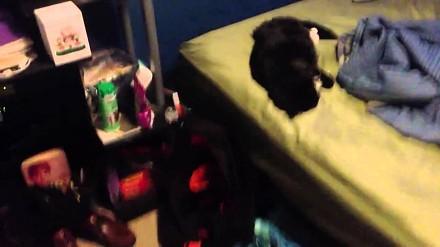 Budzenie kota petardą