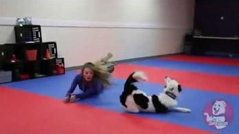 Pokaz psich umiejętności tanecznych