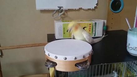 Ptak i jego bębenek