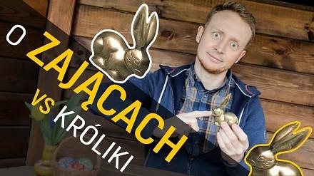 Zając vs królik - A co wy wiecie o zającach?
