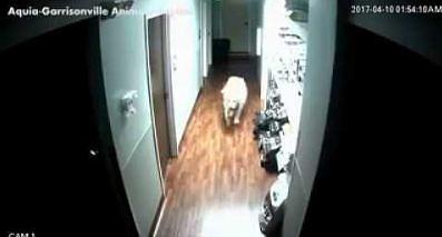 Tego psa nie powstrzymają żadne drzwi