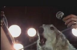 Pink Floyd - Zapomniany członek zespołu śpiewa bluesa