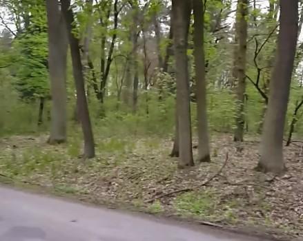 Lubuskie lasy pełne niespodzianek