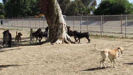 Wiewiórka w starciu ze zgrają psów