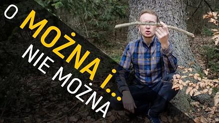 Co można robić w lesie, a za co można... dostać mandat