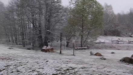 Śnieg w maju - Polska wiosna 2017