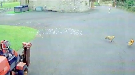 Kura walczyła o życie. Na pomoc przyszedł jej nieodziany młodzieniec