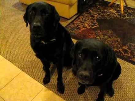 Pies kapuś donosi na siostrę