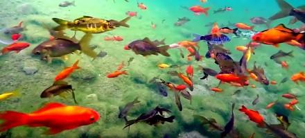 Chwila relaksu z rybkami
