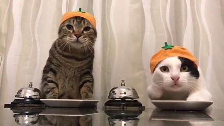 Jak Koty Reagują Na Dźwięk Grzebienia Joe Monster