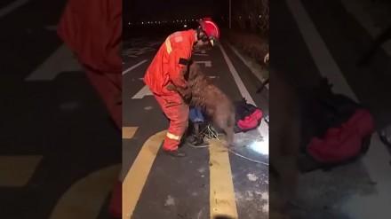 Pies dziękuje ratownikowi, który wyciągnął go ze studzienki