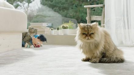 Czeska reklama banku z kotem w roli głównej
