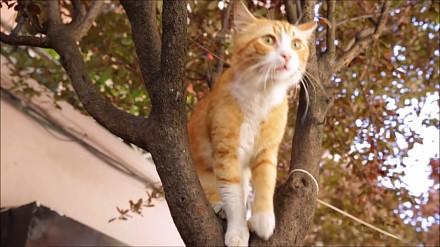Zwiastun pełnometrażowego filmu o życiu stambułskich kotów