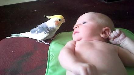 Papużka śpiewa małemu dziecku