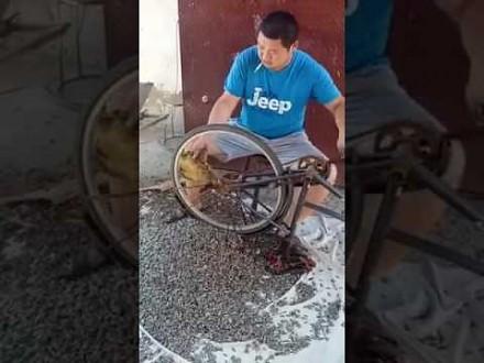 Chińska metoda czyszczenia słonecznika