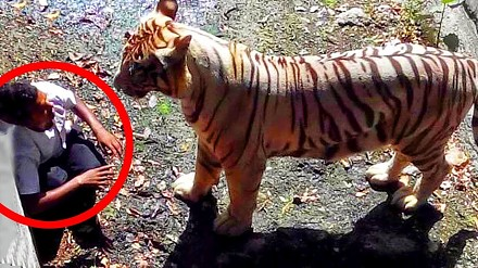 Zabójcze ataki zwierząt na ludzi (Tylko dla osób o mocnych nerwach!)