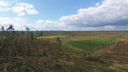Przerażające wiatrołomy w Suszku - film obrazujący zniszczenia w lasach