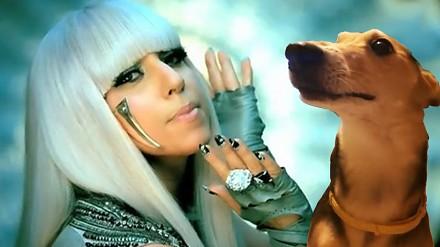 Gdyby pies śpiewał razem z Lady Gagą