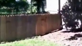 Postawił płot, żeby pies nie biegał po okolicy
