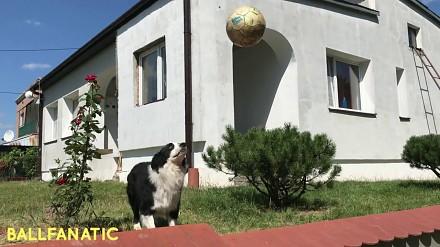 Ten niesamowity pies kocha grać w piłkę. Zobacz sam!
