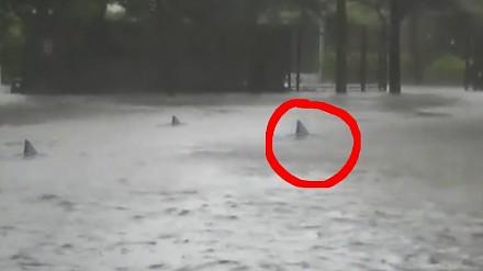 Po huraganie na ulicach Miami pojawiły się rekiny