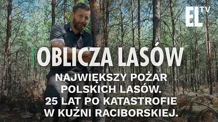 Największy pożar polskich lasów. 25 lat po katastrofie w Kuźni Raciborskiej