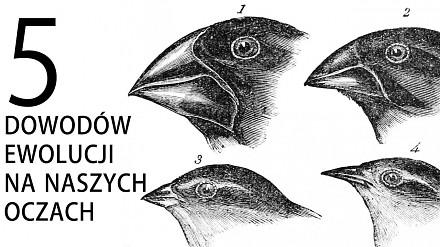 5 dowodów ewolucji, która zachodzi na naszych oczach - Uwaga! Naukowy Bełkot