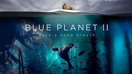 """BBC o życiu morskim - druga część filmu """"Blue Planet"""""""