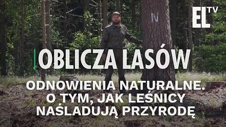 Odnowienia naturalne. O tym, jak leśnicy naśladują przyrodę