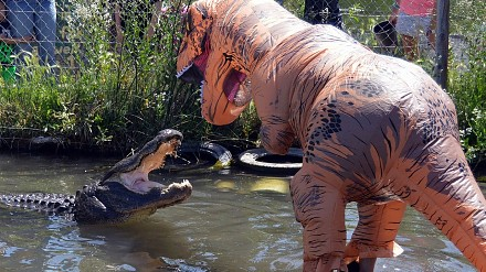 Nowa amerykańska rozrywka. Zabawa z aligatorem