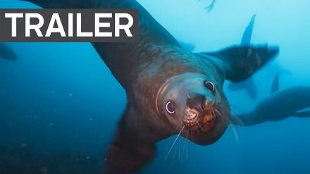 """Nowy zwiastun """"Blue Planet II"""" pokazuje piękne morskie żyjątka"""