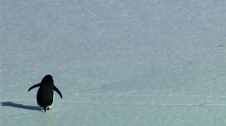 Pingwin nihilista odchodzi, by popełnić samobójstwo